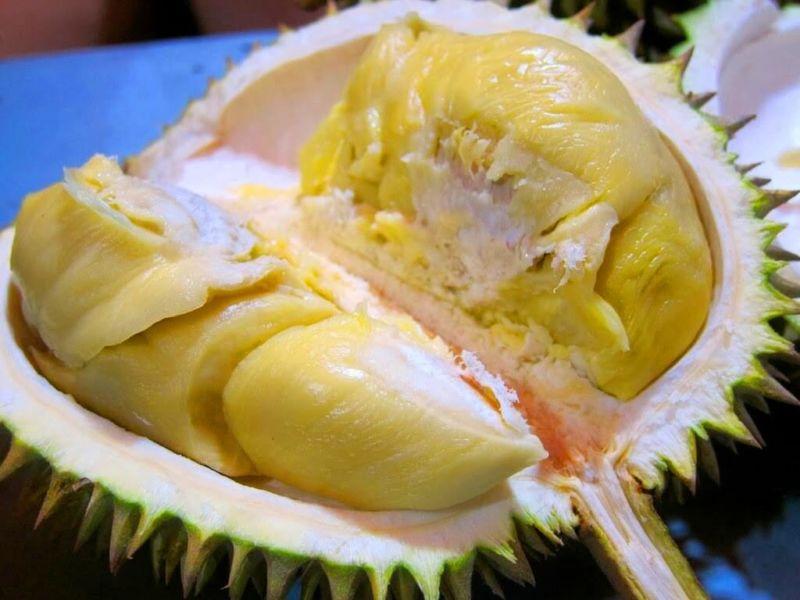 Jual Bibit Durian Montong Murah