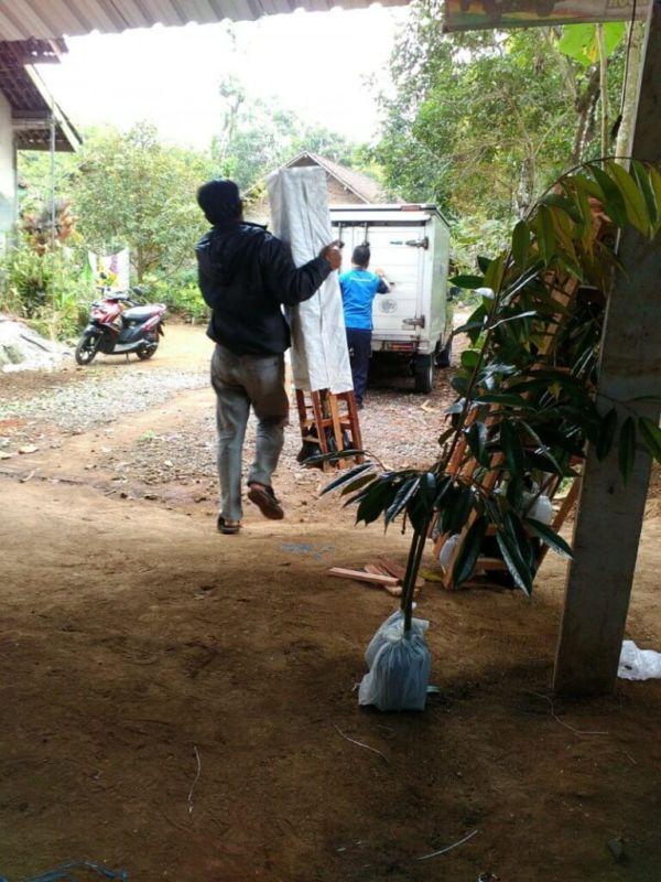 Jual Bibit Durian Unggulan